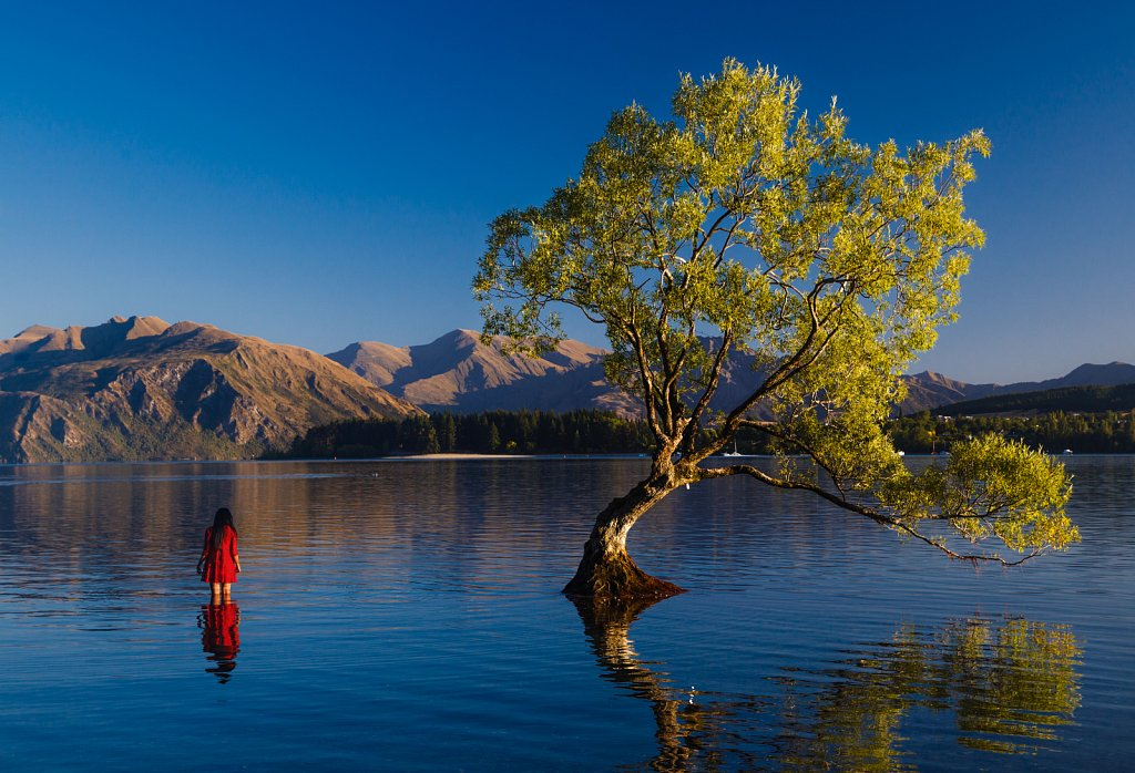 Ananya Ray and That Wanaka Tree